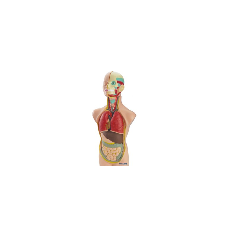Jogo miniland anatomia...